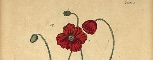 flowerpictorial_gallery